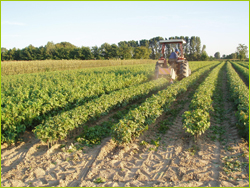 Piante padova vivai maistrello vendita piante da frutto for Vivai piante da frutto