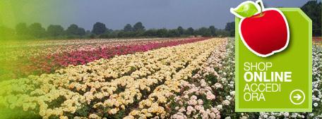 Arbusti da fiore vivai maistrello piante di gelso for Piante da frutto nane in vaso